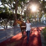 Longines Masters Los Angeles - Chesall Zimequest